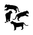 wild tiger silhouettes isolated set safari vector image