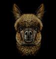 alpaca llama portrait vector image vector image