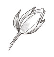 closed bud wild magnolia flower isolated sketch vector image vector image