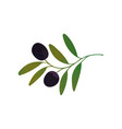decorative branch with black olives and vector image vector image