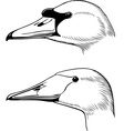 Head of swan vector image vector image
