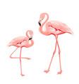 tropical birds pink flamingos set vector image vector image