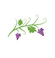 grapes logo icon template vector image vector image