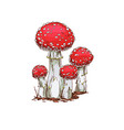 family of fly agaric mushrooms isolated on white vector image