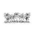 panoramic view of the forest from palm trees vector image vector image