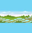 rice field landscape cartoon vector image vector image