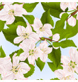 seamless texture twig of apple tree with flowers vector image vector image
