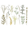 silhouettes various grass vector image