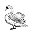 swan bird engraving vector image vector image