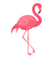 Flamingo isolated on the white background vector image