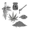 hand drawn set with hemp leaf cannabis oil cone vector image vector image