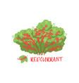 redcurrant garden berry bush with name vector image