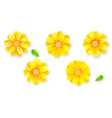 set buds flower and green leafs daisy vector image vector image