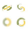 wheat oats logo vector image