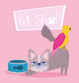 pet shop small fluffy cat bird and food in bowl vector image vector image