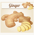 ginger root cartoon icon vector image vector image