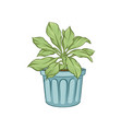 green house plant in pot hand drawn vector image