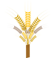 sheaf with ears vector image