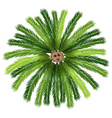 A sago palm tree vector image