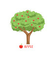 apple garden fruit tree with red apples and name vector image vector image