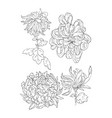 chrysantemum line art for coloring book or tattoo vector image