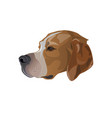 portrait of english pointer vector image