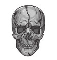 skull isolated on a white background graphics vector image vector image
