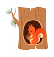 funny squirrel as forest animal sitting in tree