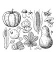 harvest products hand drawn vintage vector image vector image