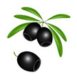 icon of black olives without pits on white vector image