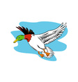 Mallard Duck Flying vector image vector image