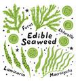 set edible seaweed laminaria macrocystis vector image vector image