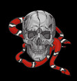 skull with a milk snake on a black background vector image