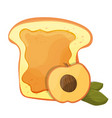peach or apricot jam breakfast toast vector image vector image
