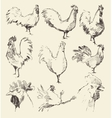 Set hand drawn roosters sketch vector image vector image