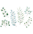 set watercolor botanical elements vector image vector image