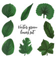 leaves different shapes vector image vector image