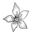lily hand drawn vector image vector image