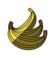 sweet bananas fruit vector image vector image