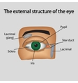 The external structure of the eye vector image vector image