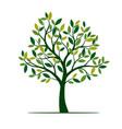 green spring tree vector image vector image