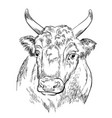 head strong bull hand drawing vector image