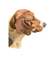 portrait of a hound dog vector image