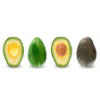 set of ripe realistic fruits of avocado vector image vector image