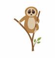 wild loris on branch vector image