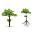 big tree with root vector image vector image