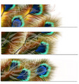 fashion pattern with colorful feathers vector image