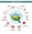 foods infographics green tea foods infographics vector image vector image