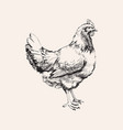 hand drawn sketch chicken hen vector image vector image
