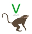 Alphabet letter V vervet children vector image vector image